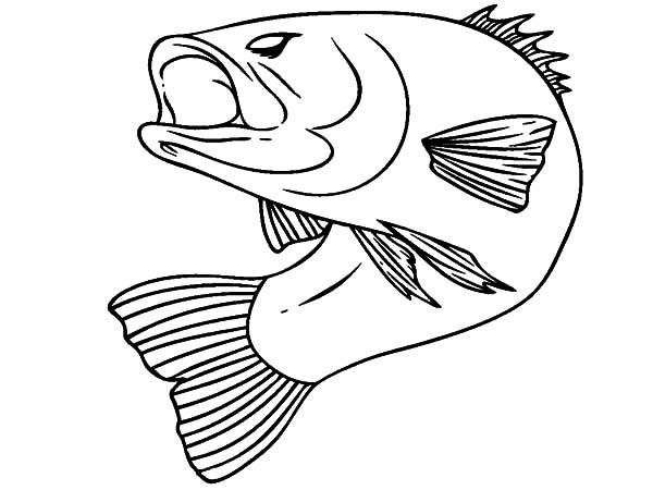 Bass Fish Bend His Body Coloring Pages Best Place To Color Fish Coloring Page Coloring Pages Animal Coloring Pages
