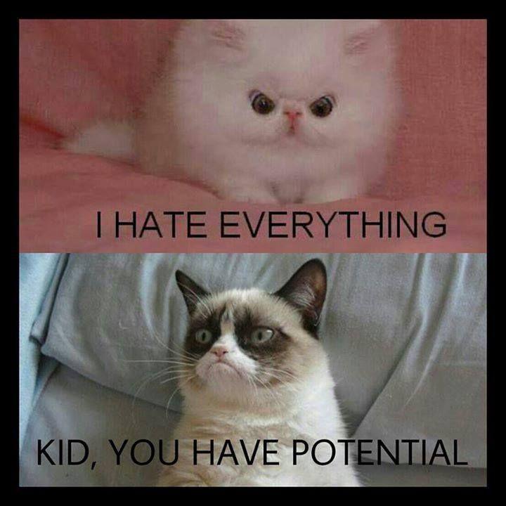 Kid, you have potential   Grumpy cat meme, Grumpy cat ...