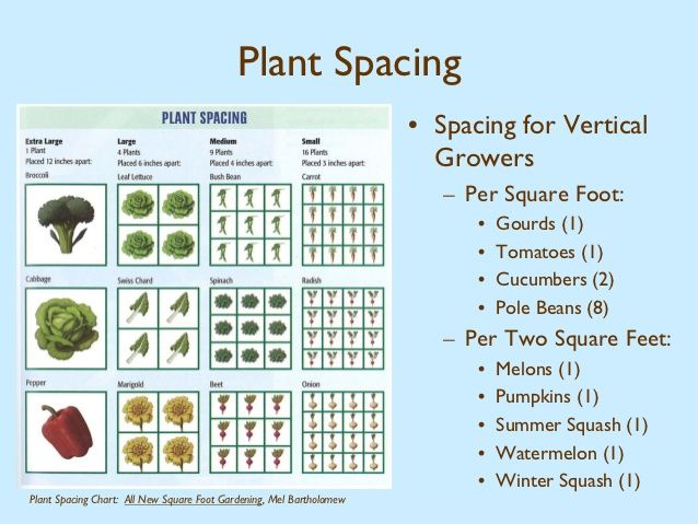 Find This Pin And More On VEGGIE GARDEN. Quickie Chart For Square Foot  Plant Spacing