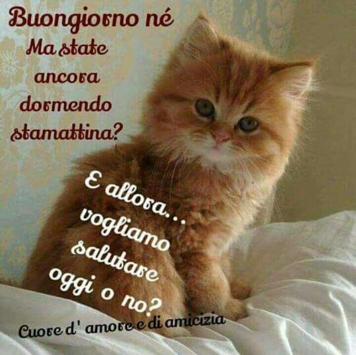 Buongiorno gatto inspirational buongiorno buongiorno for Buongiorno con gattini
