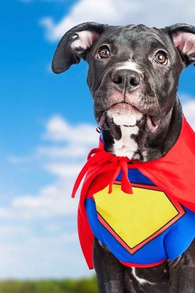 Superhero Movie Inspired Dog Names Wag! Dog names, Top