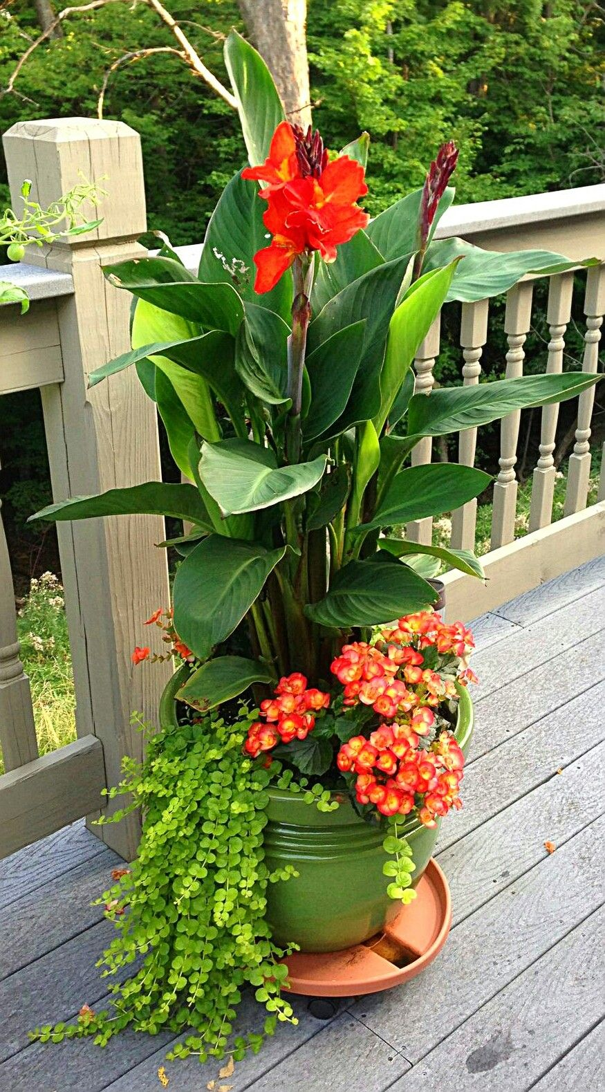 pinbonnie moore on container gardening | pinterest | thrillers