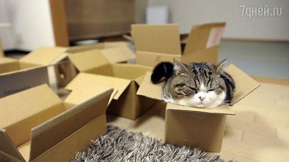 «Как ты туда залез?!»: котики в коробочках - 7Дней.ру