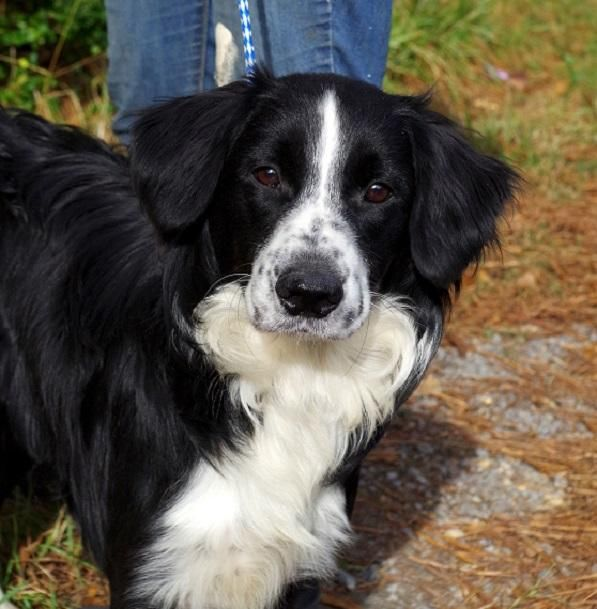 Adopt Walker On Petfinder Collie Mix Dogs Border Collie