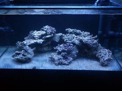 aquascaping reef - Google Search   nano reef tank ...