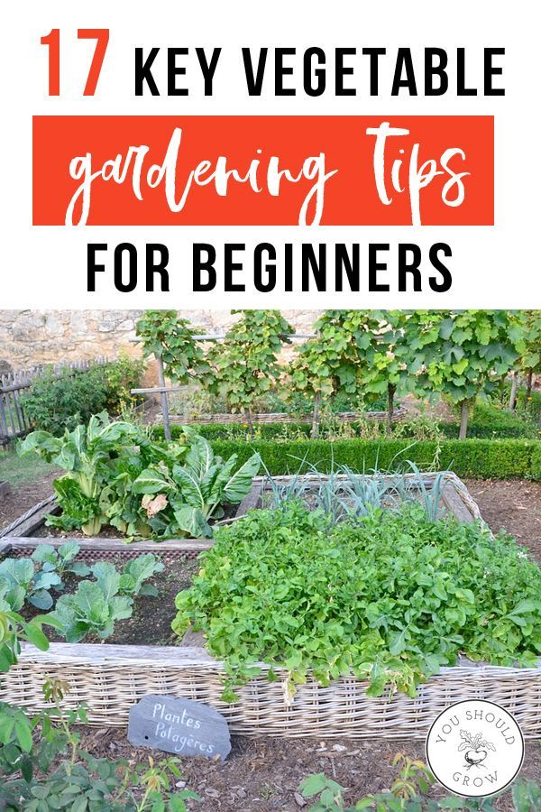 17 Key Vegetable Gardening Tips For Beginners is part of Growing vegetables, Garden pests, Starting a vegetable garden, Wildflower garden, Gardening for beginners, Gardening tips - Vegetable gardening is a great way to get started gardening for beginners  If the idea of growing your own food sounds good but you're looking for some advice to get started, check out these essential tips that will help you get the best
