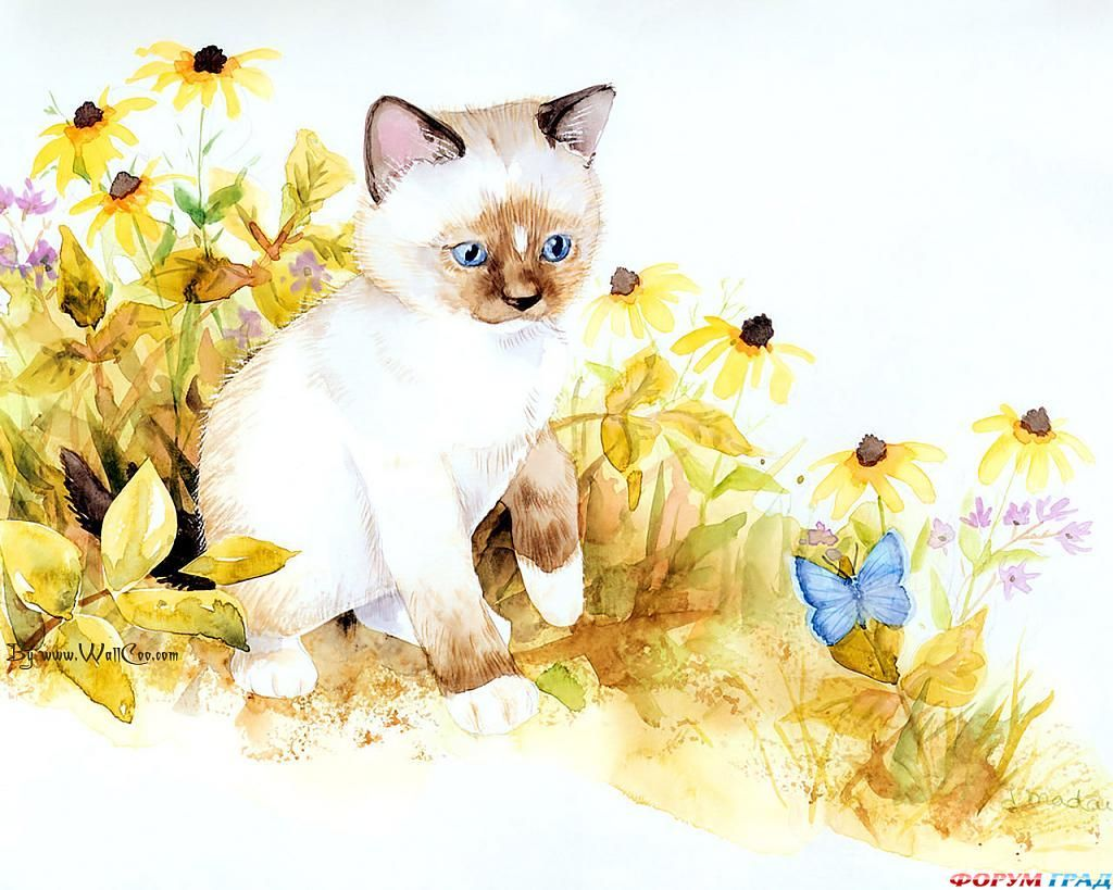 Днем, открытки с сиамскими котятами