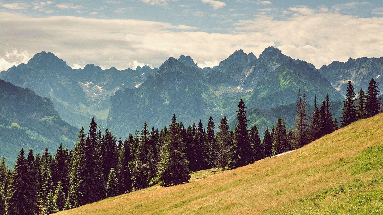Pine Trees Landscape Landscape Trees Landscape Tree Landscape Wallpaper