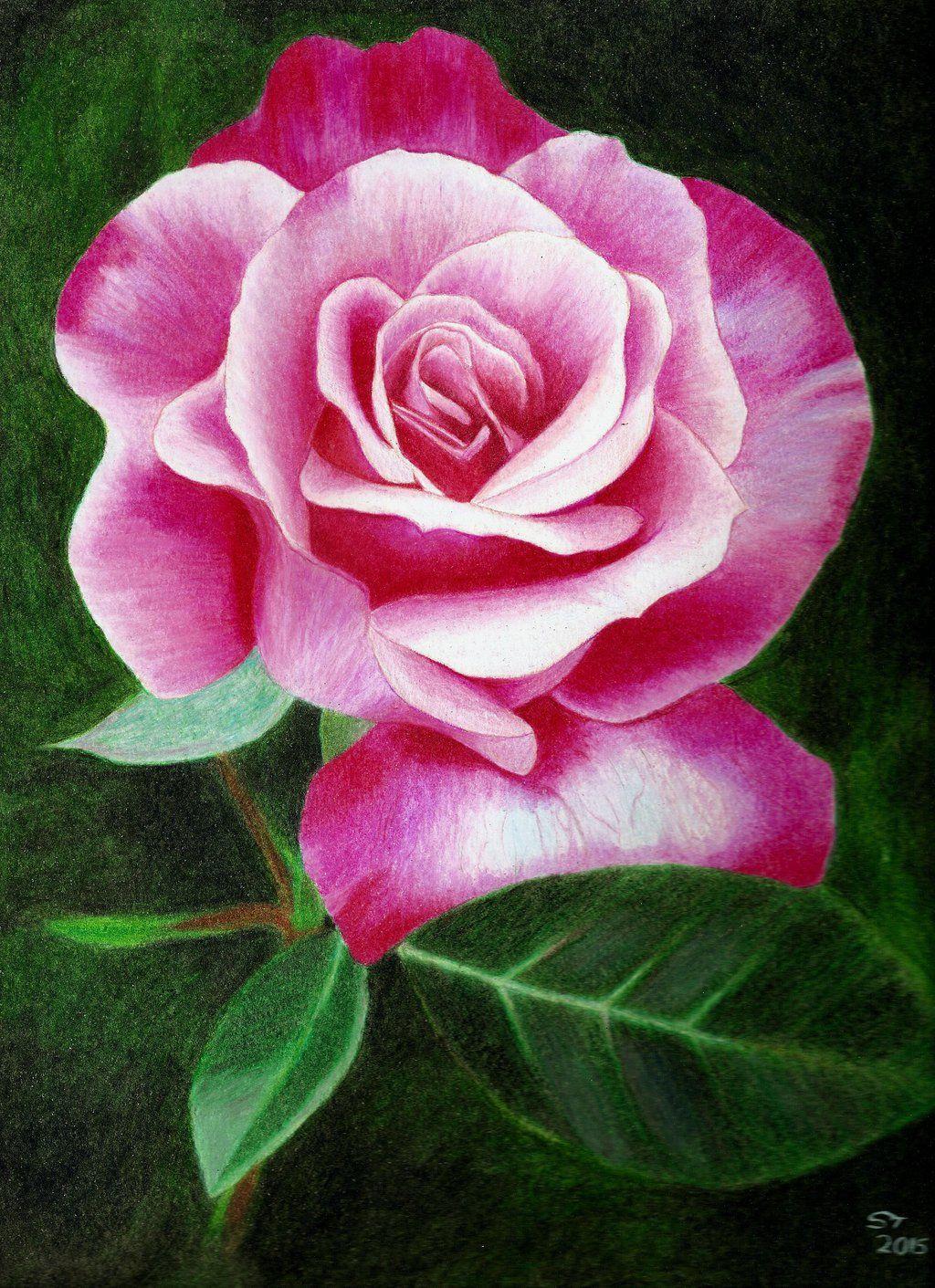 Розы нарисованные карандашом картинки цветные