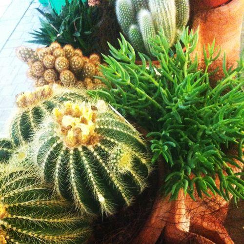 Mostra Mercato Piante Grasse E Succulente 2014 Con Immagini