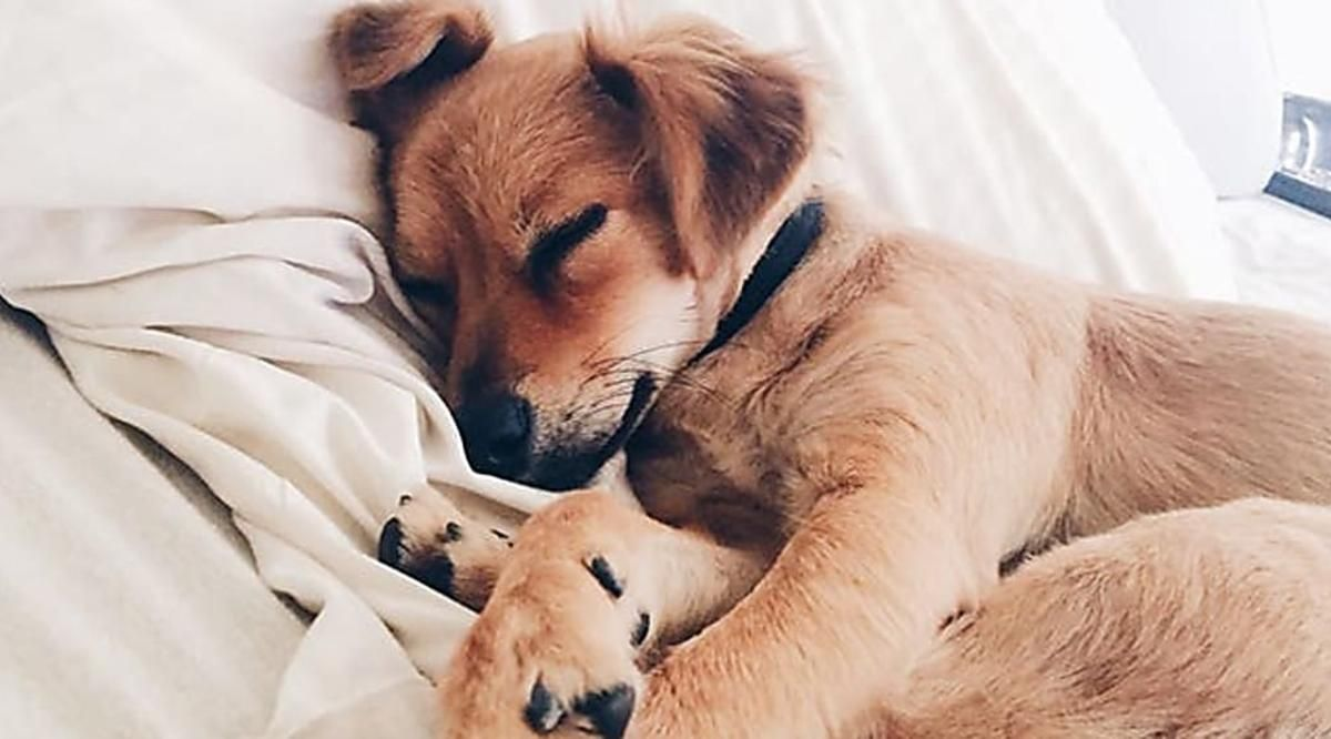 Slideshow If Your Dog Follows You In Your Bed Here S What It Means Dog Sleeping In Bed Sleeping Puppies