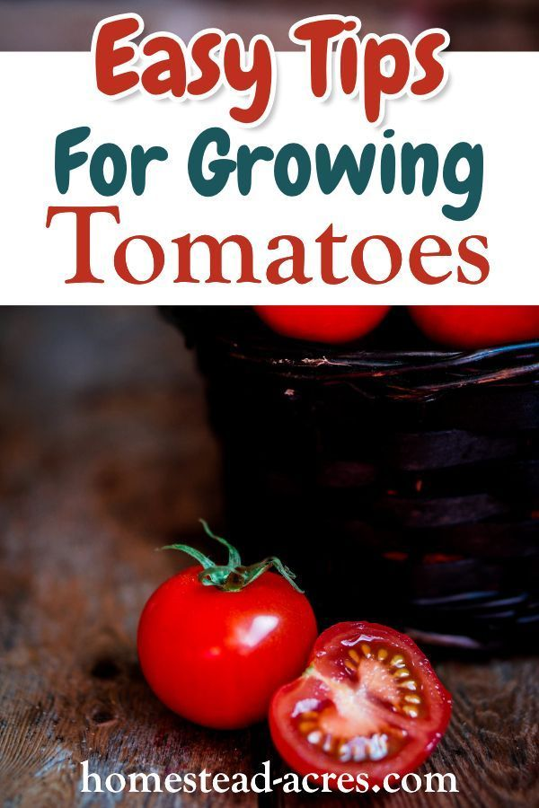 Vegetablegarden Homesteadacres Gardening Beginners Tomatoes