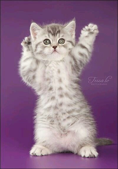 Pin by Jo =^,^= Allen on adorable Beautiful cats, Cute