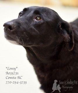 10 20 17 Sl I M Lovey I Need A Home I Ve Been At This Shelter Since 8 24 17 Urgent Urgent Urgent Dog Adoption Petsmart Dog Dogs