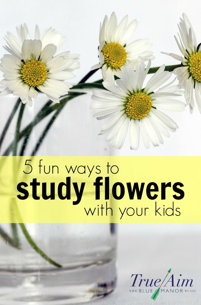 Kid science experiments - 5 fun ways to study flowers - STEM with flowers