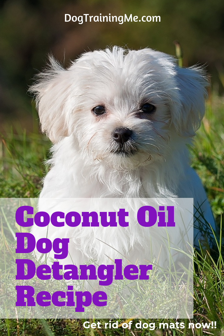 A coconut oil dog detangler can help when matted dog hair