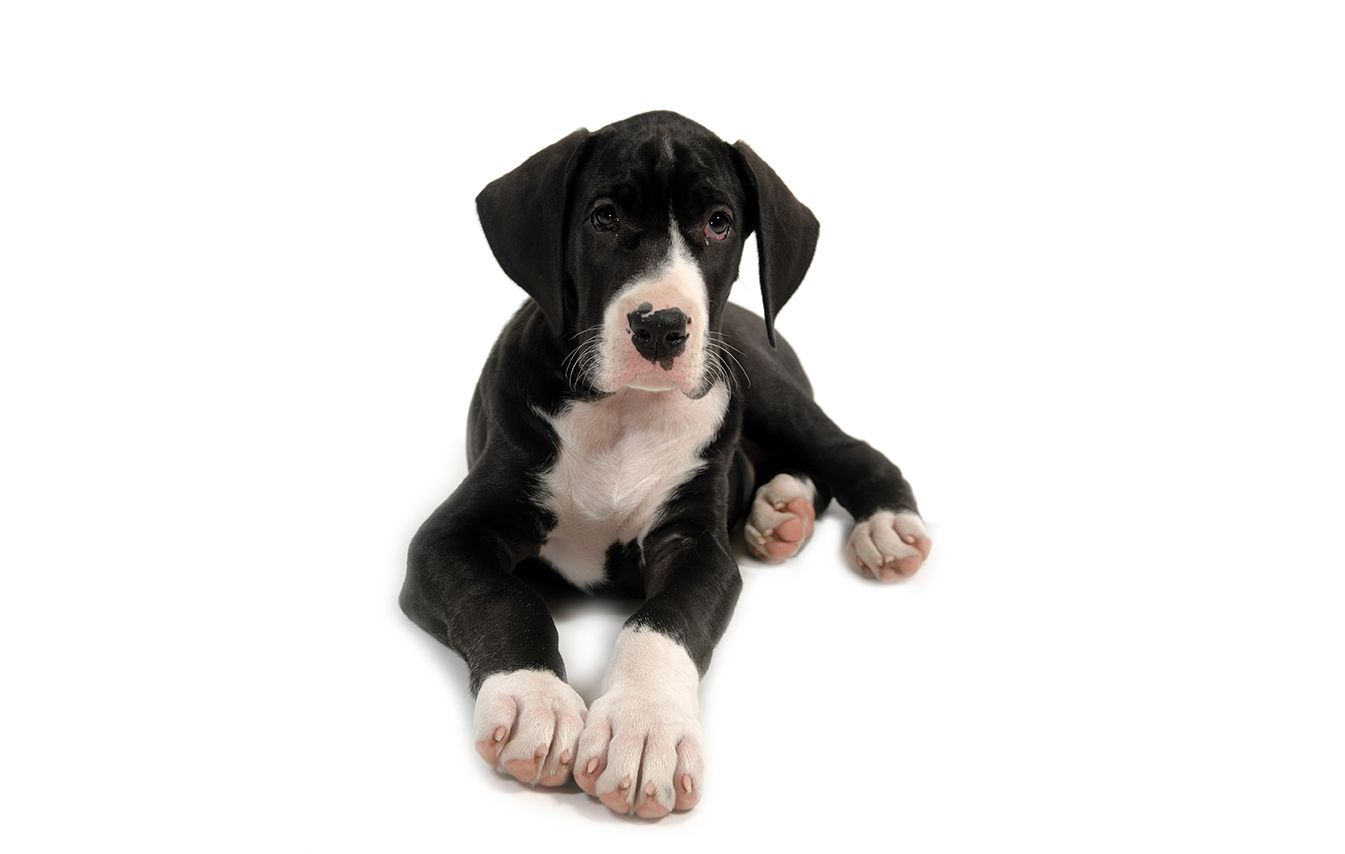 Crazy Cool Black And White Dog Names 37 Perfect Ideas Great