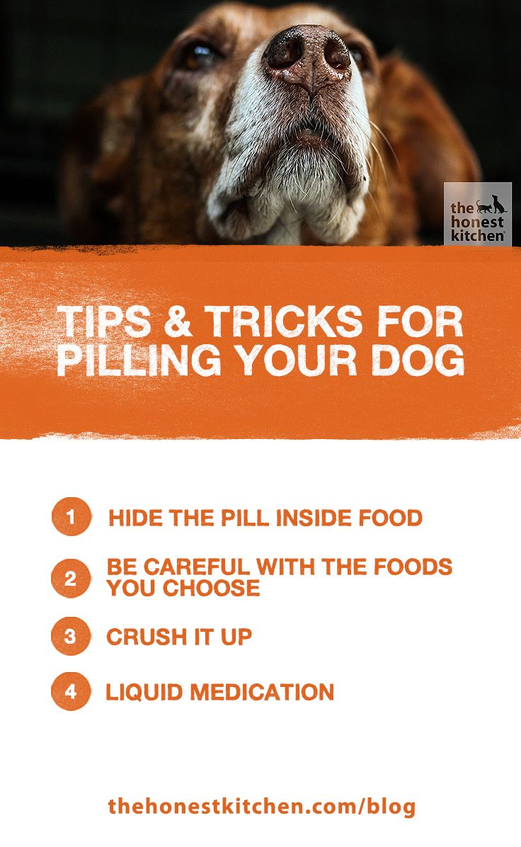 Expert tips and tricks for pilling your dog the honest