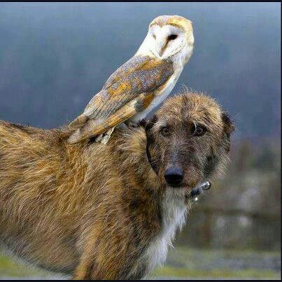 Owl and doggy
