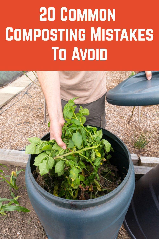 Pin On Growing Fruits Veggies