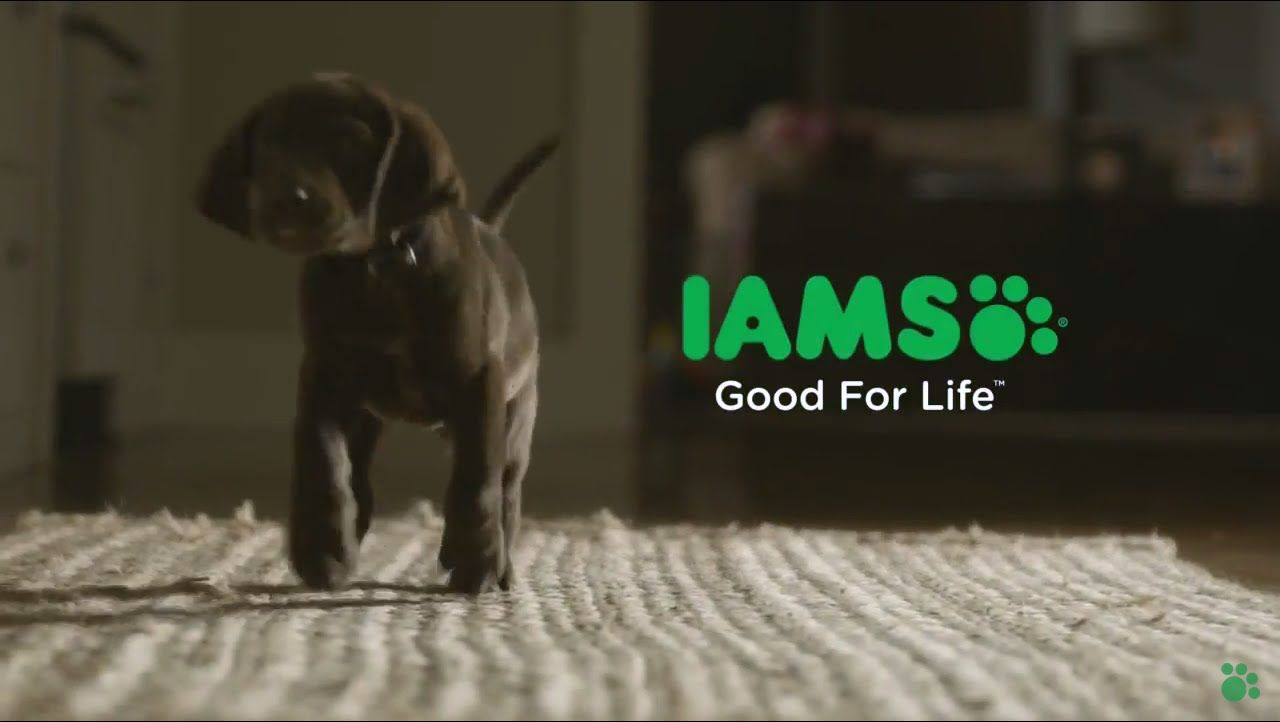 Iams So Good Dog Food Commercial Real Love