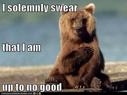 Mischief Managed Bear Meme Funny Bears Grizzly Bear