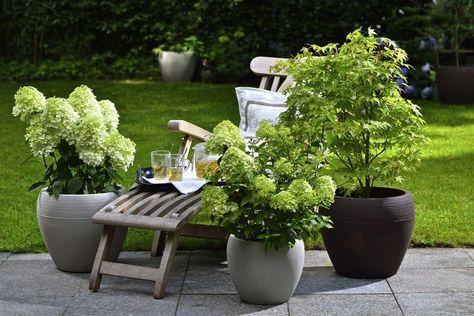 winterharte geh lze f r die k belbepflanzung pinterest. Black Bedroom Furniture Sets. Home Design Ideas