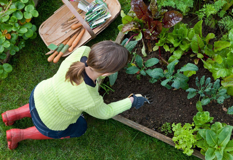 231e4eb028aed16f0d717e04bca587c0 - Leaf It To Me Gardening Services