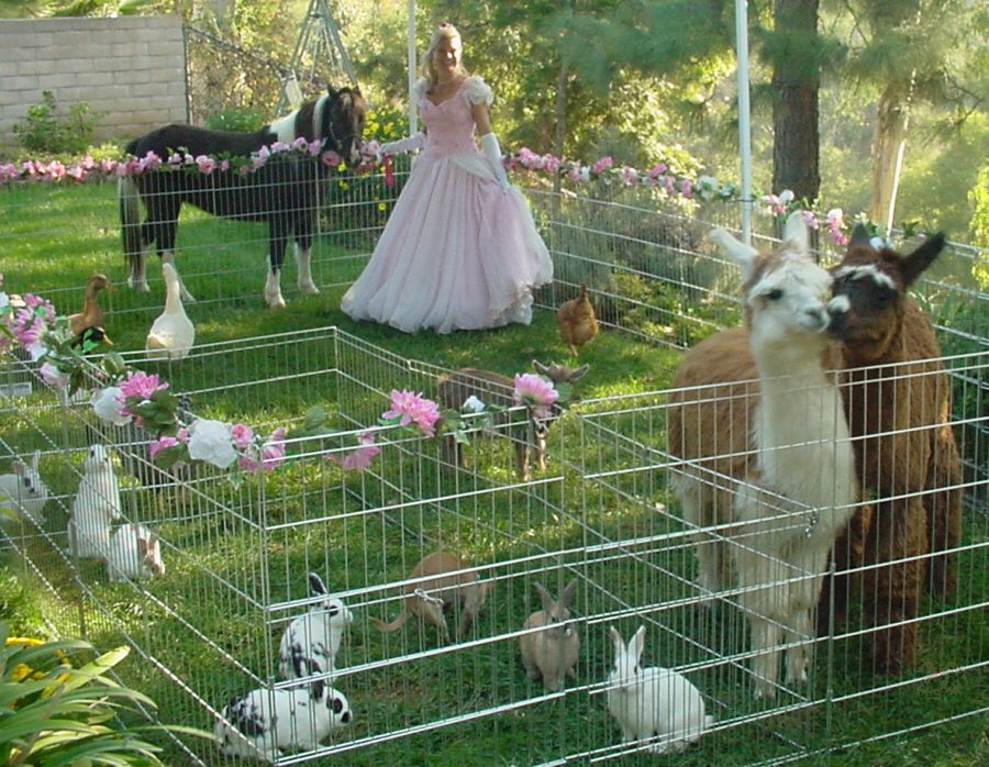 princess petting zoo party PoniesPetting ZooCarriageHay Ride