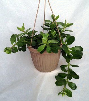 Low Light Patio Plants
