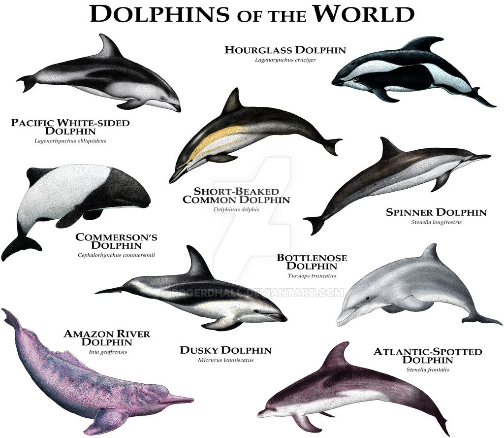 Dolphins of the world by on for How many fish are in the world