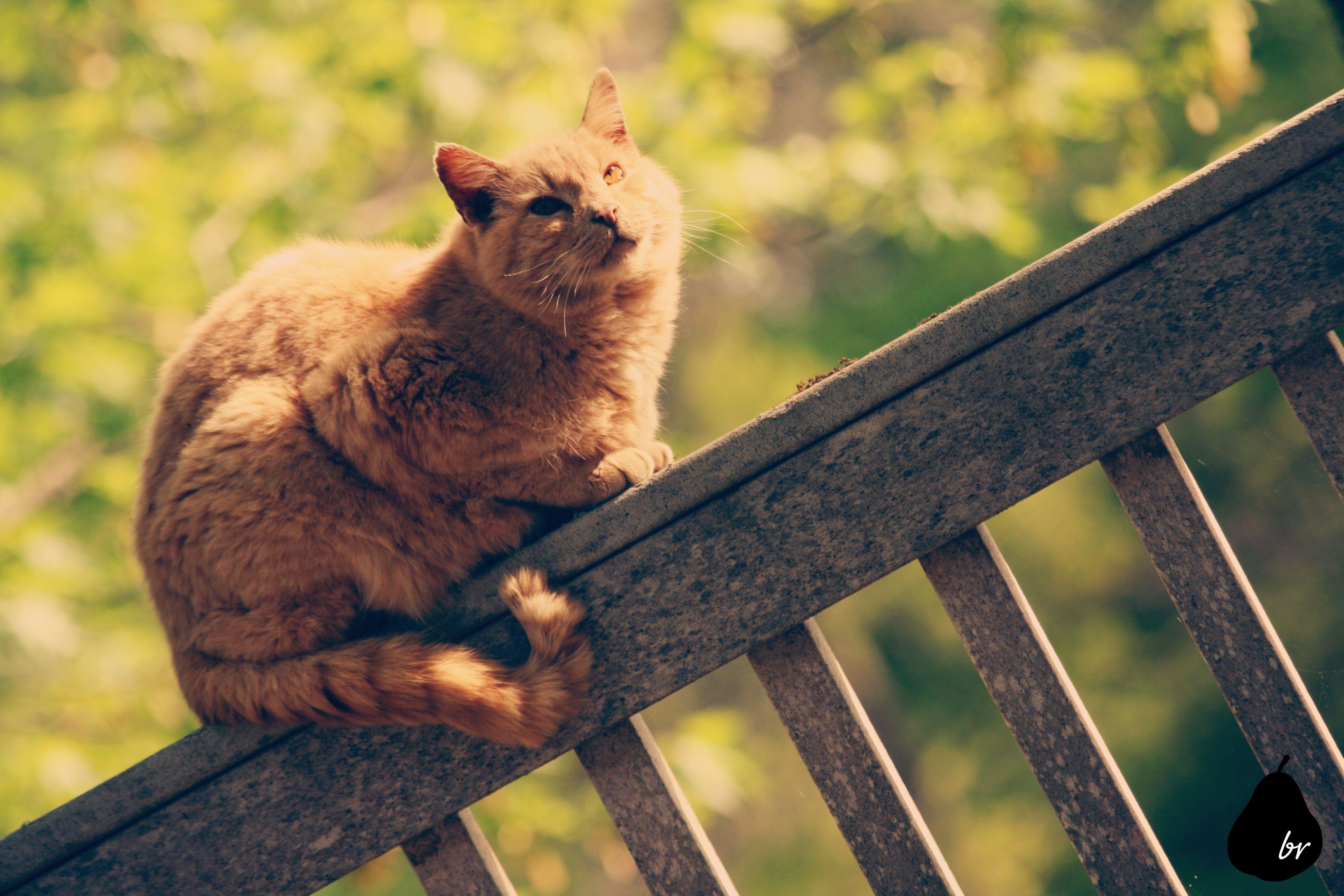 another orange tabby cat Pets, Tabby cat, Orange tabby cats