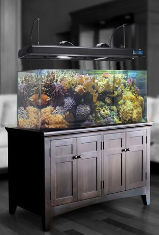 [+] Fish Tank Stands