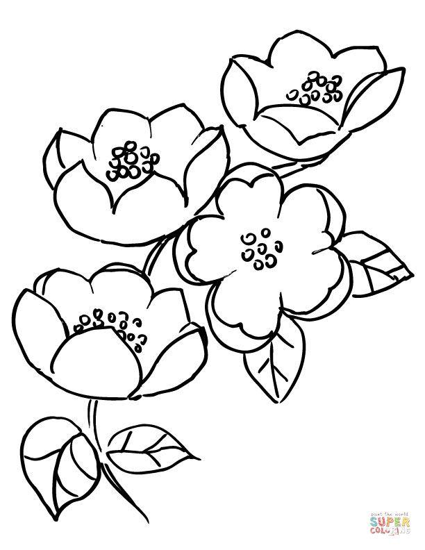 Apple Blossom Branch | Super Coloring | déssins fleurs | Pinterest