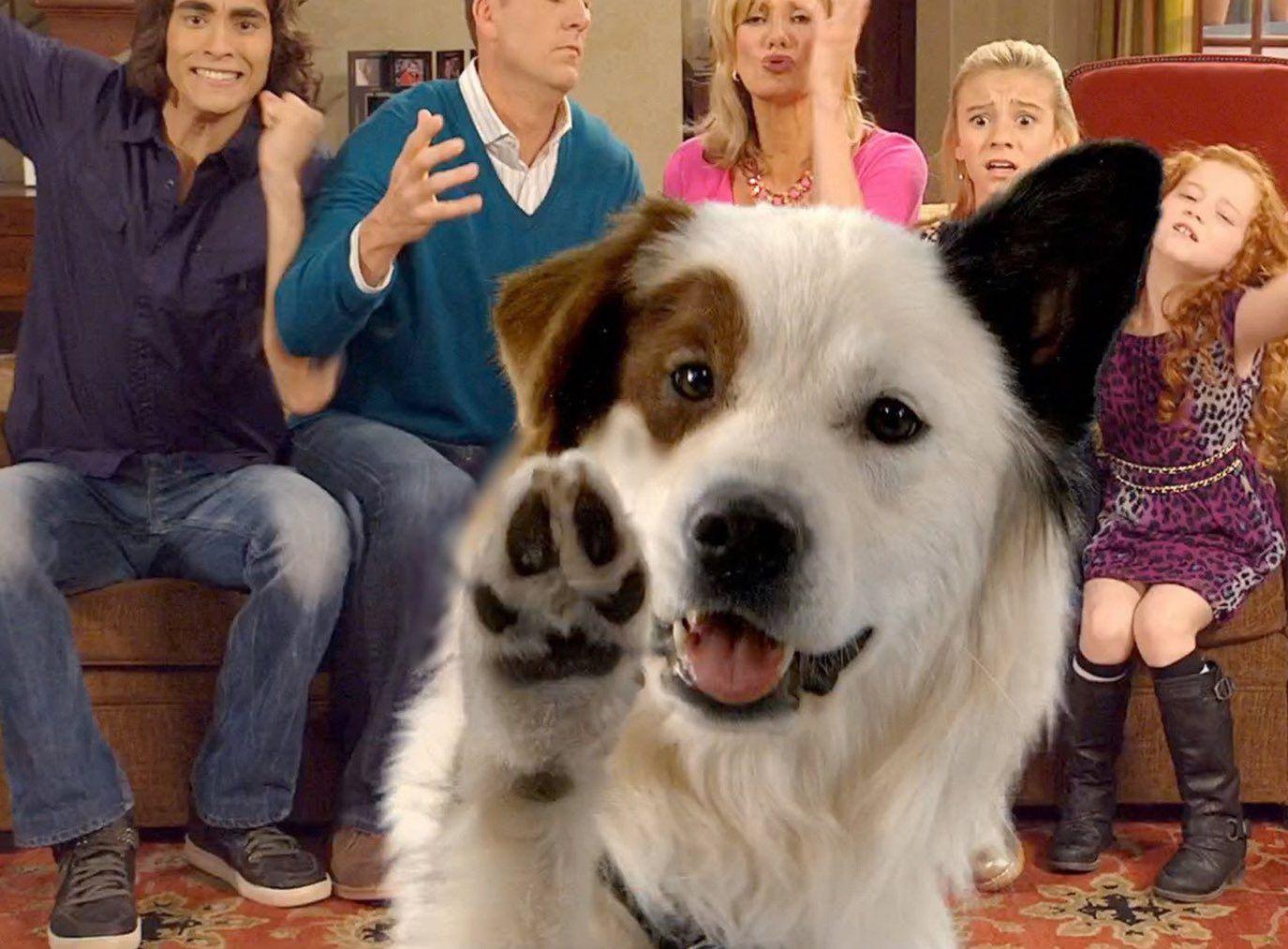 Dog With A Blog Kuma