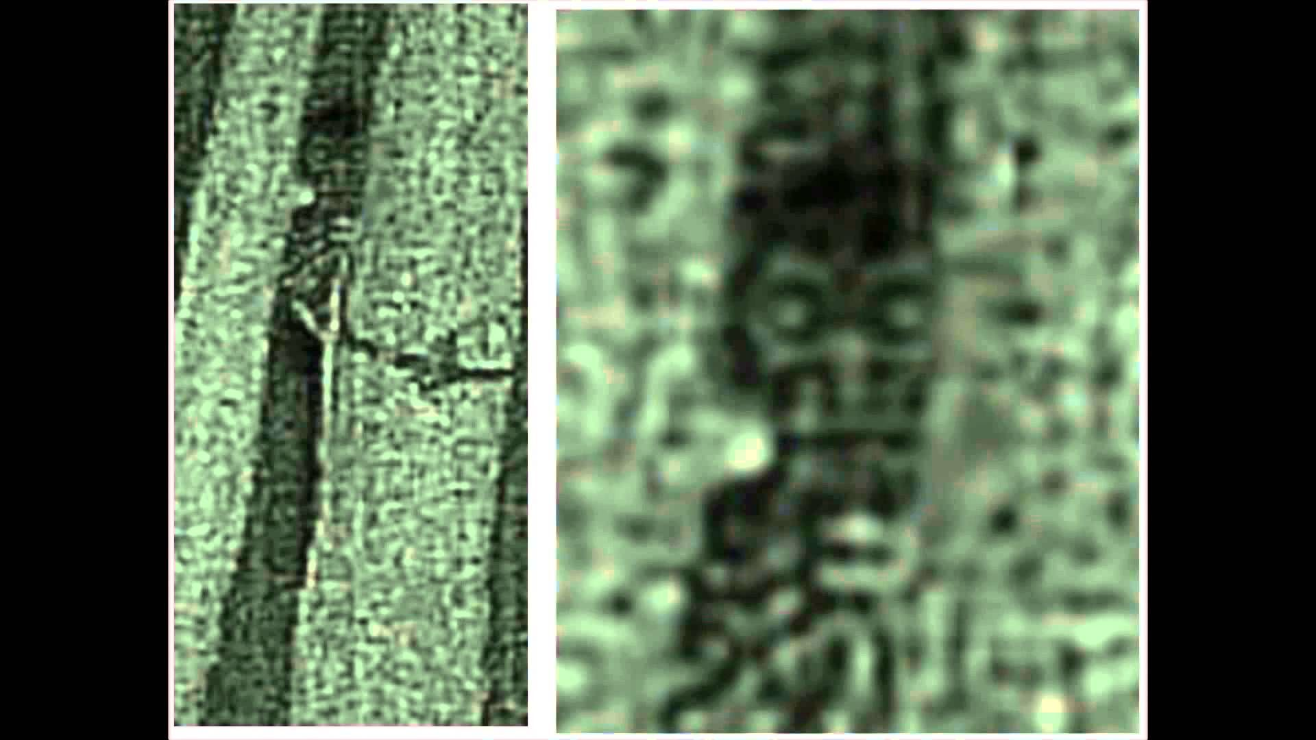 Five Years of Bigfoot Research – Just Scratching the Surface