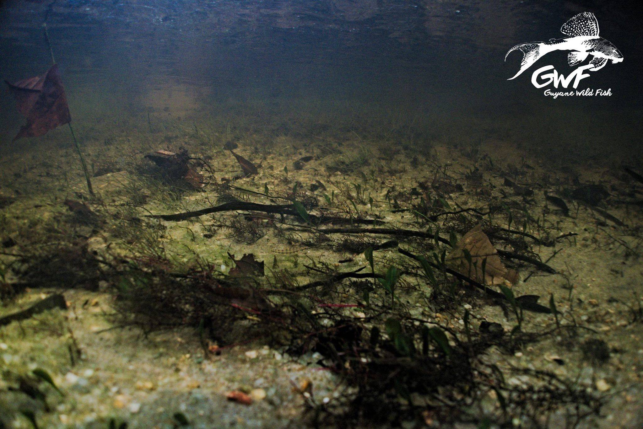23210d20bae55f0917421e85793eefa8 Frais De Aquarium Amazonien Concept