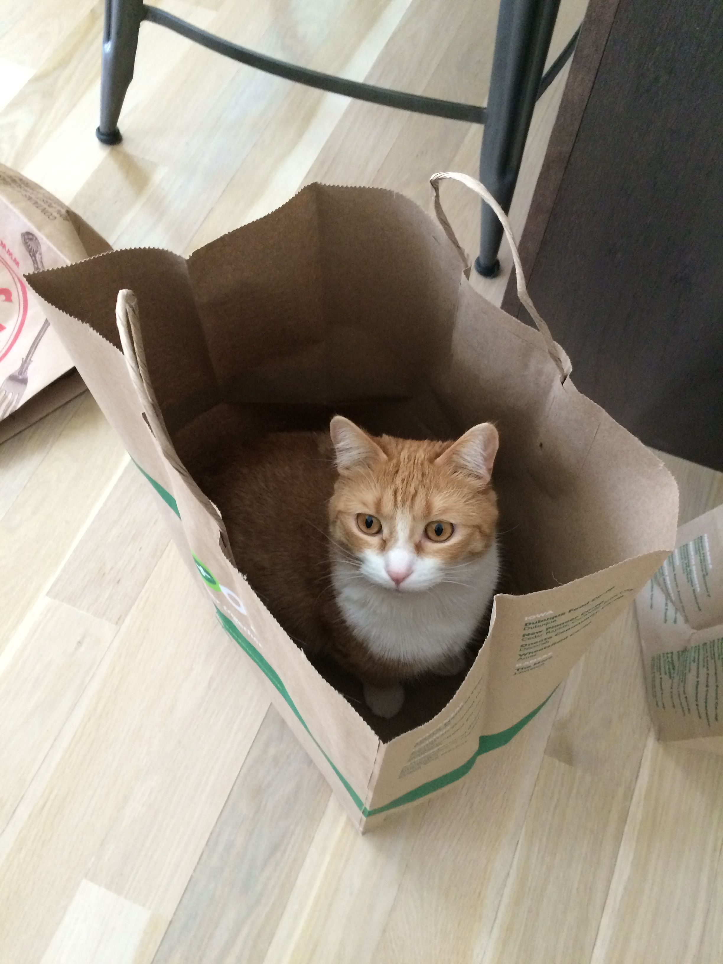Kitten In A Bag Ginger Cat Love Ginger Cats Cat Love Kitten