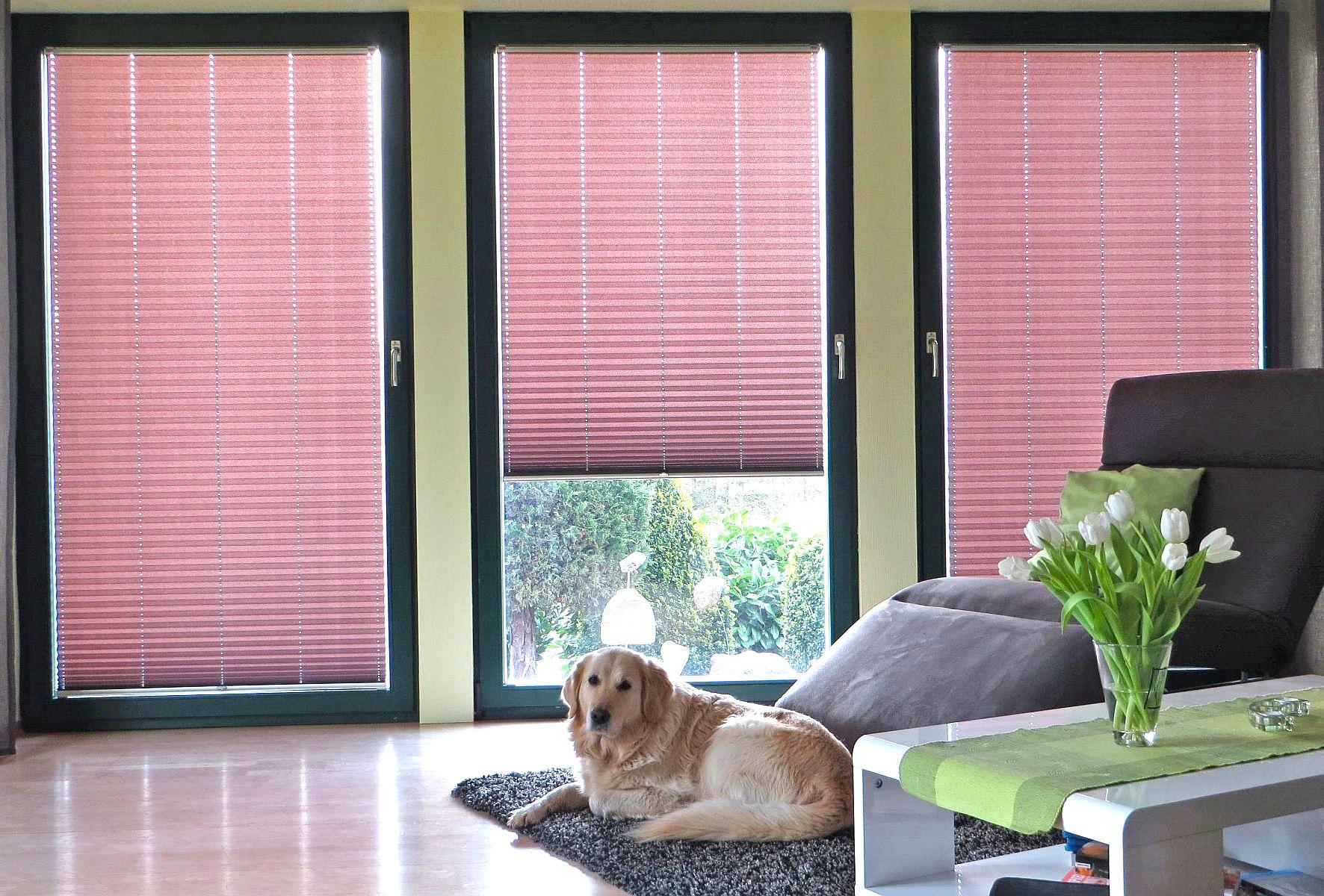 Wohnzimmer rollos ~ Plissee #hund #wohnzimmer #leben #blume macht euer zuhause schöner