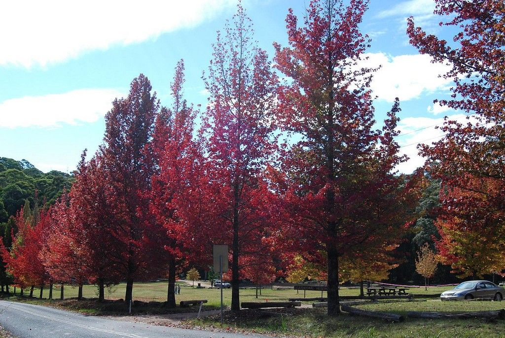 What Are Deciduous Trees And Shrubs Types Of Deciduous Trees And Shrubs Landscaping Trees Deciduous Trees Trees To Plant