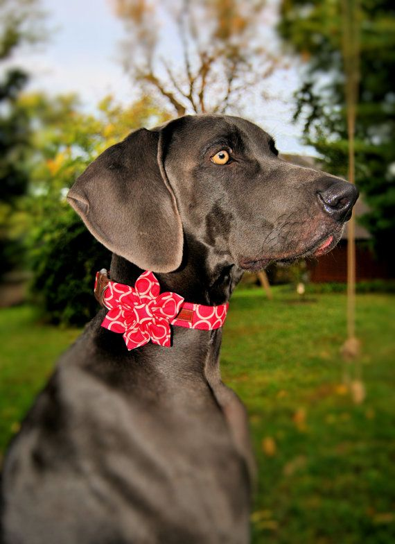 Dog Collar and Flower SetMod Dog in Pop Star by BowWowCouture, $31.95