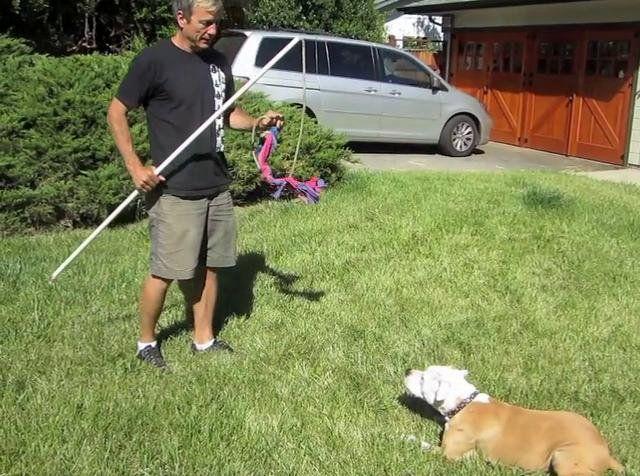 Training Video Flirt Pole Basics Dogs Learn Best When Learning