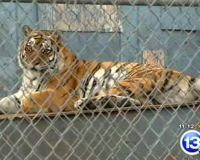 Urgent: Exotic Animals Could Be Euthanized This Week