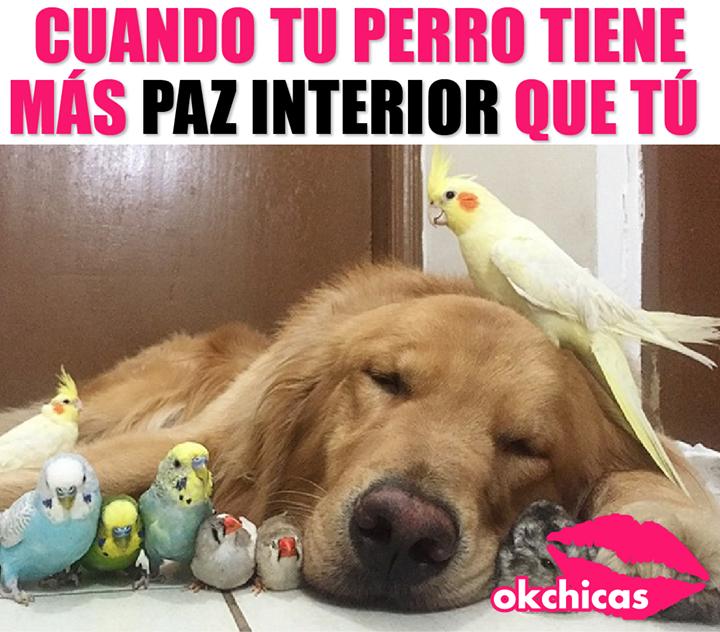 Quisiera Esa Misma Paciencia Cuando Me Toca Cuidar Ninos Funny Memes Animal Memes Funny