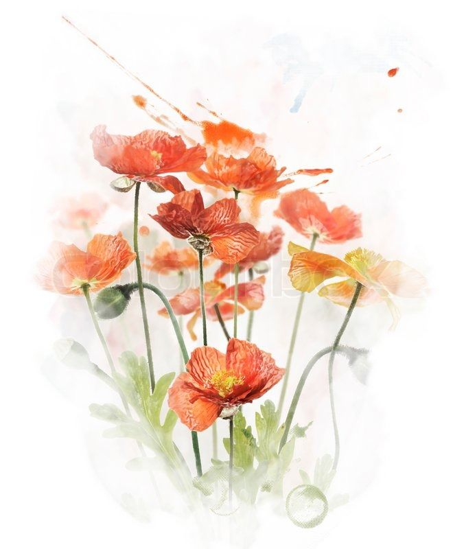 Get this hi res stock photo watercolor digital painting of red poppy get this hi res stock photo watercolor digital painting of red poppy flowers buy mightylinksfo