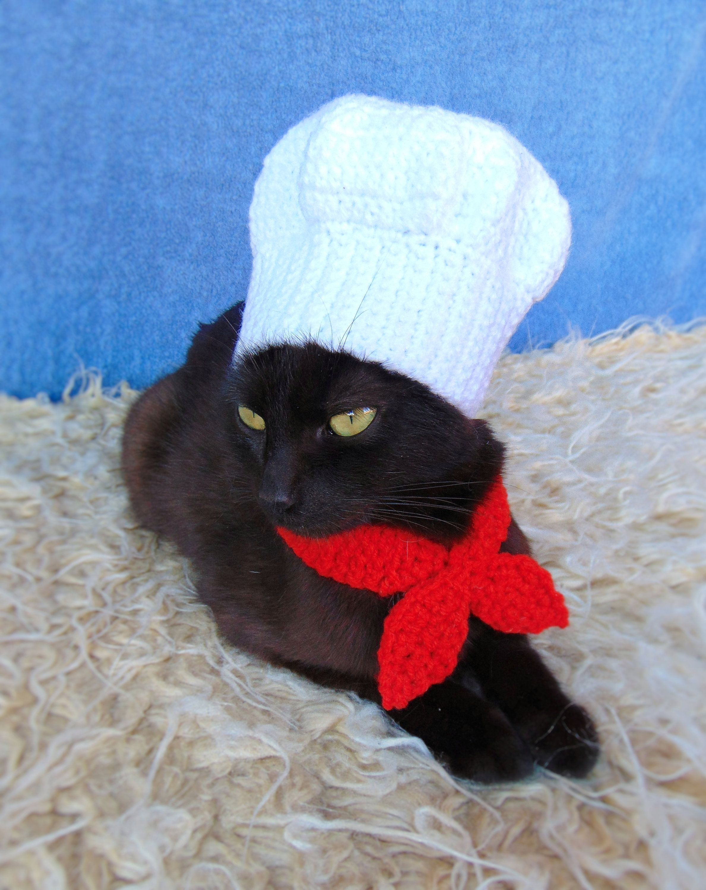 Chef Hat For Cat Chef Pet Costume Halloween Kitten Outfit Etsy In 2020 Pet Costumes Cat Accessories Cat Harness