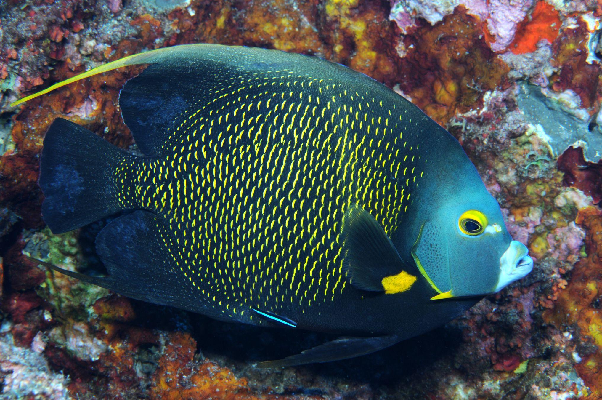 офисные рыбы названия с фото качество