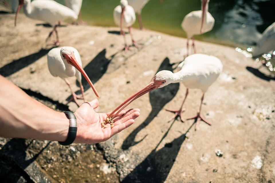 Miami´s Zoo I Animal Encounters I #miami #zoo #bird I http://www.myfavouriteplaces.de