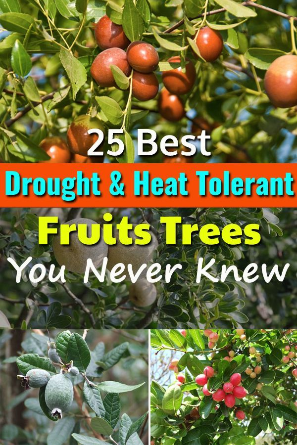 25 Best Drought Tolerant Fruit Trees That Grow In Lack Of 400 x 300