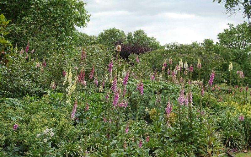 Flowers in St. James's Park #ThePurplePassport #nature